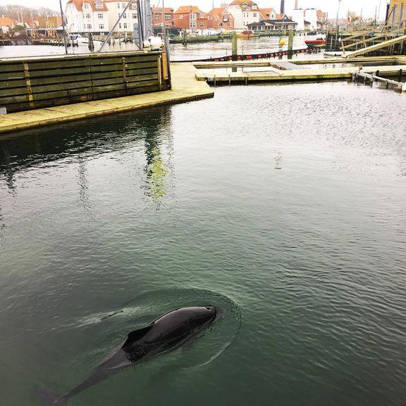 Folketingspolitikere vil have sat indespærrede danske hvaler fri